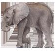 Elefante - pelaje 52