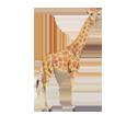 Jirafa adulto - pelaje 34