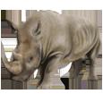 Rinoceronte adulto - pelaje 52