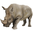 Rinoceronte - pelaje 52