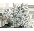 Puerco-espín  adulto - pelaje 29