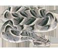 Víbora bufadora - pelaje 52