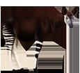 Okapi - pelaje 5