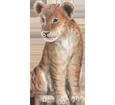 León bebé - pelaje 2