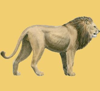 Acoger a un animal de la sabana de especie león
