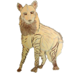 Hiena rayada adulto - pelaje 1000000034