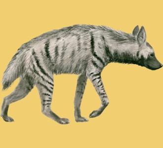 Acoger a un animal de la sabana de especie hiena rayada