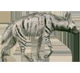 Hiena rayada adulto - pelaje 9