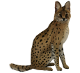 Serval adulto - pelaje 46