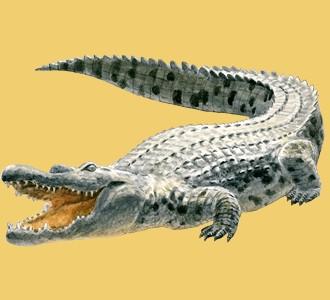 Acoger a un animal de la sabana de especie cocodrilo